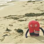 Curcú en la playa